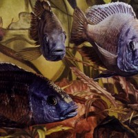 Ribe   50-40,2001
